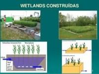 UFMG recebe seminário sobre Wetlands