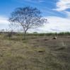 Política pública sobre florestas ficará compartilhada entre os Ministérios do Meio Ambiente e Agricultura