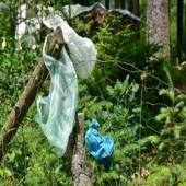 Poluição por resíduos plásticos gera preocupação mundial