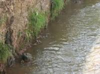 Feam elabora Plano de atuação para tratamento de esgostos  na Bacia do Rio Paraopeba