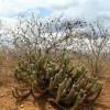 Caatinga poderá ter lei de proteção, com medidas para coibir desmatamento